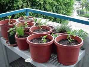 plante-jardin